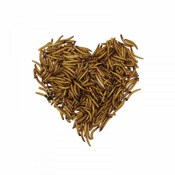 Dried Mealworm Pet Food