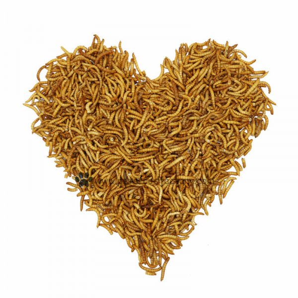 100% Natural No Additive Yellow Frozen Mealworms